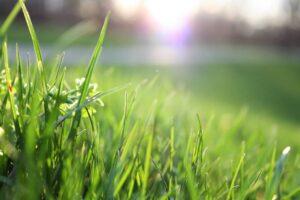 Gepflegtes Grün im eigenen Garten